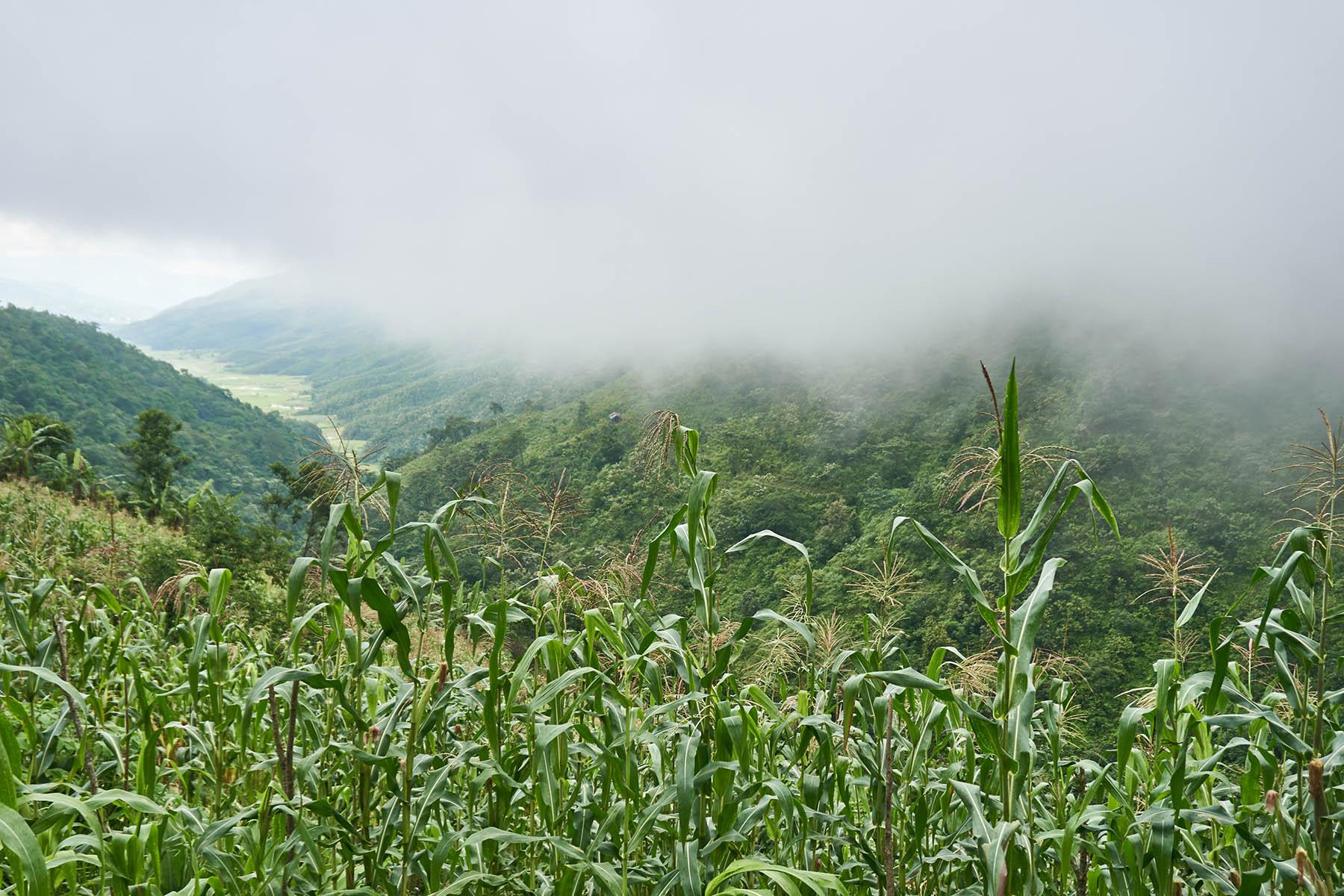 Chmury poniżej szczytu wzgórza