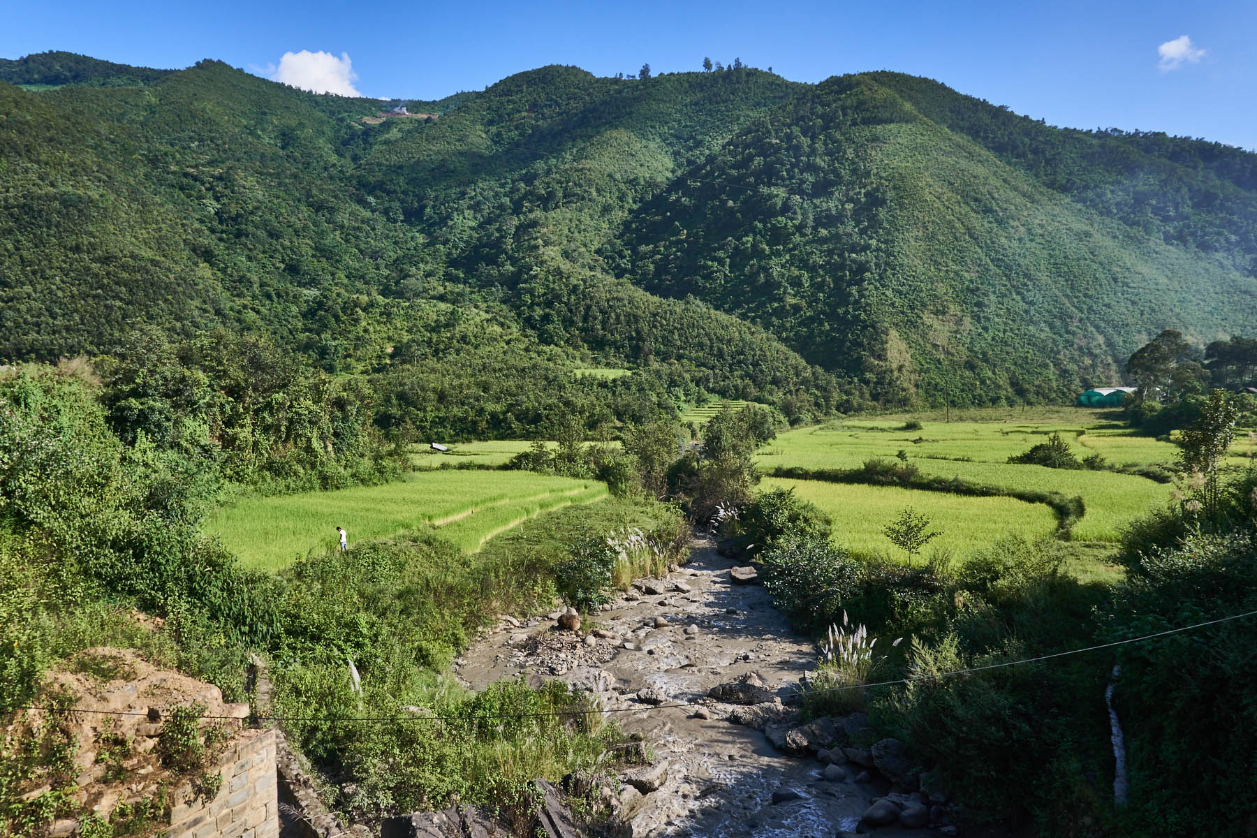 Paddy fields, river and hill