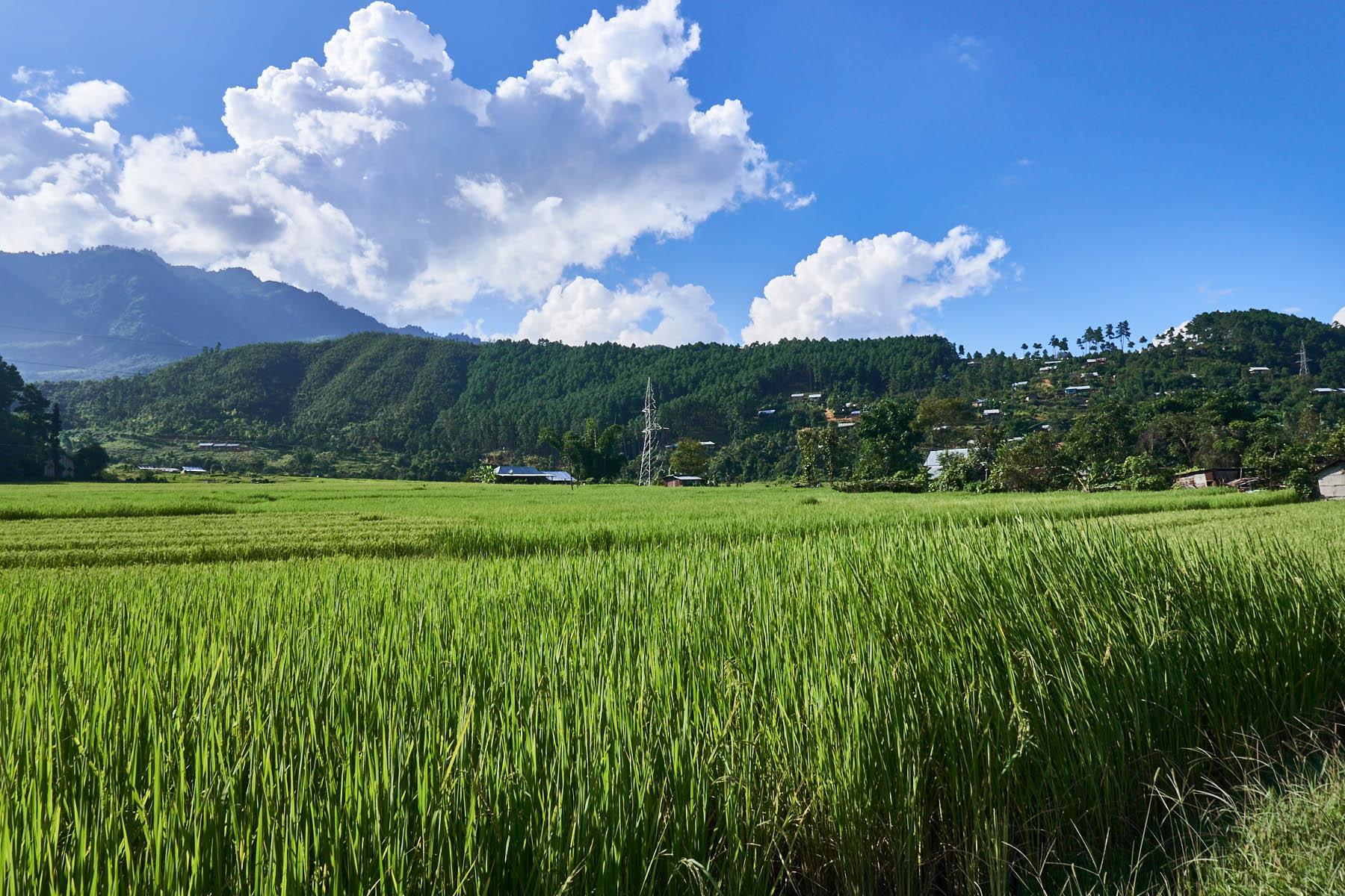 Pola ryżowe i wzgórza