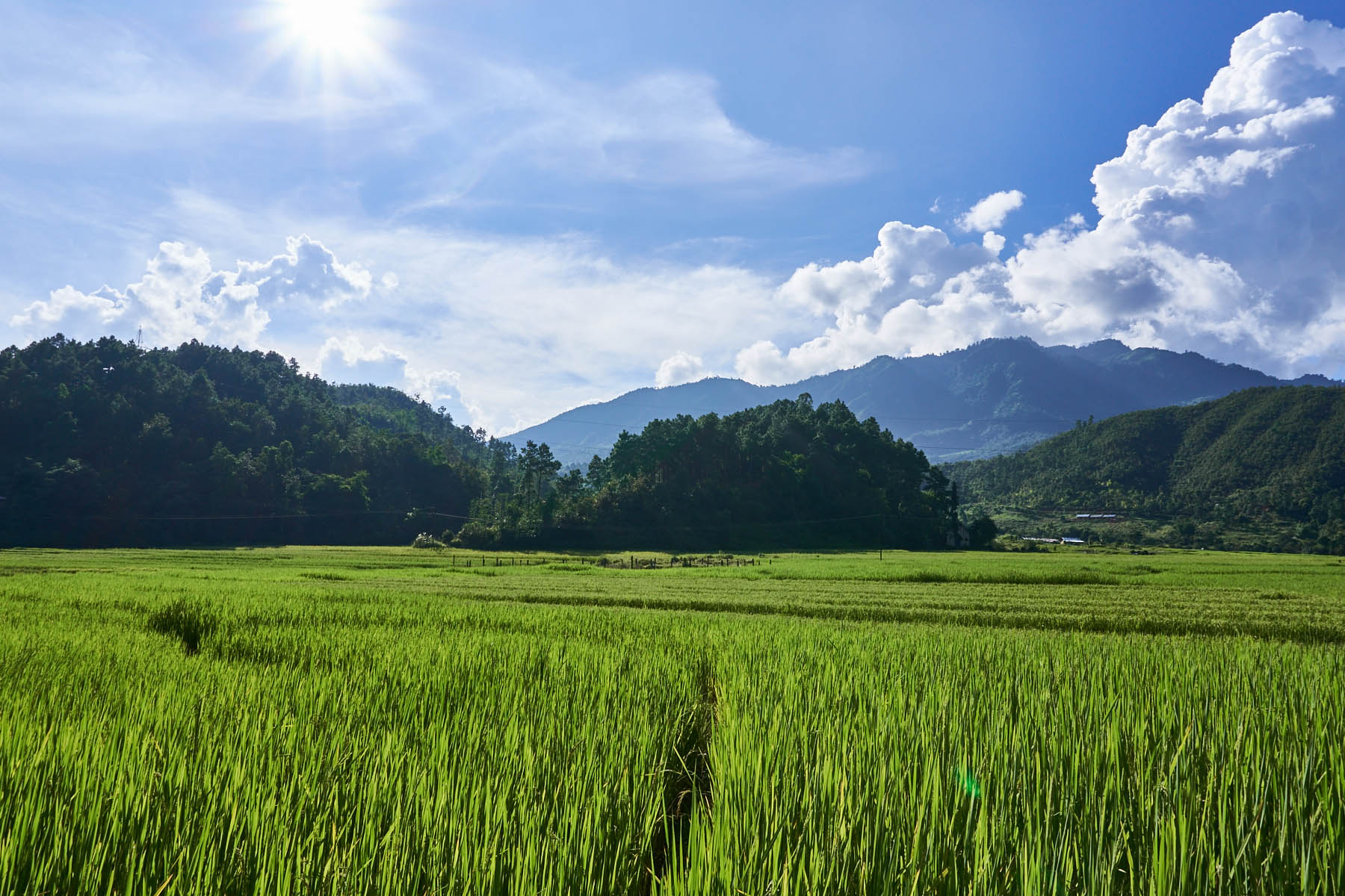 Sun over the rice fields and hills